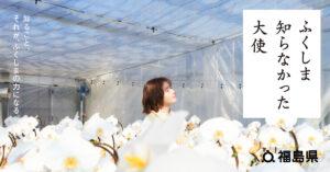 「ふくしま知らなかった大使」に就任した松岡茉優さんが当社の胡蝶蘭「hopewhite」の育成現場を訪れる動画が公開されました